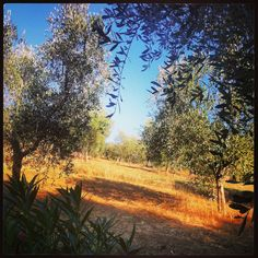 Grosseto# Maremma # Italia #toscana