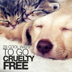 Go Cruelty Free with cosmetics and cleaning products that do not test on animals. Convenience is the most common reason animal testing is still done animals. Join us and choose cruelty free products. #pets #animals
