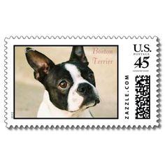 boston-terrier-0239, Boston Terrier Stamp from http://www.zazzle.com/boston+terrier+gifts