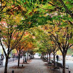 Autumn in Portland's Pearl District.