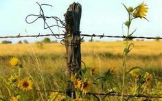 Love a field of wild flowers and an old fence post. It says... Midwest..Heart of America.