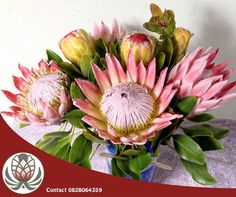 The King Protea has a vase life of 14 to 21 days, sometimes longer, split stem ends for maximum water absorption! Purchase your King Proteas from Bofberg Flowers before they go out of season.