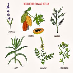 Natural Remedies for Digestive System Acid Reflux Remedies, Healthy Lifestyle Changes, Physical Activities, Natural Remedies, The Cure, Cases, Nature, Naturaleza, Natural Treatments