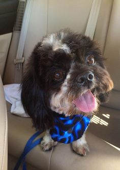 Maybe we can help poor guy finding a loving home. #dogsforadoption #havanese http://www.doggielife.com/oreo/dogs/CQZJ6K