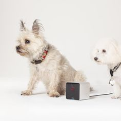 Petcube Interactive Camera | $199.00 | Watch. Play. Share. With Petcube, you can stay connected to your pets when you're away from home. It allows them to watch, talk to and play with their pets using a built-in laser pointer toy from a smartphone anytime, anywhere. The sleek aluminum cube houses a 138 degree wide angle camera that streams video directly to your iOS and Android device...