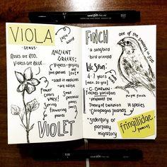 Finch & Violet doodles from janellalalaf on IG #allthebrightplaces