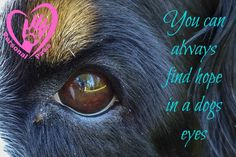 Quote hond week 17 Personal Paws