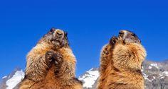 Funny groundhog related bing homepage!