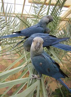 parrot cage hyacinth macaw with photos