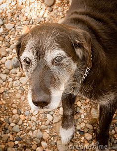 old dog - Google Search