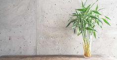 Les plantes du Feng Shui, en plus de limiter l'air vicié, ont un rôle énergétique et stabilisateur. Dans les angles et recoins d'une maison, elles permettent de neutraliser les énergies néfastes et de faire circuler le chi. Dans les grandes pièces et les couloirs ces plantes le ralentissent.