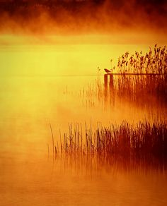 Golden Sunrise by **  REgiNA  **  on 500px