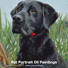 Dog Sketches, Dog Drawings, Classical Realism, Black Dogs, Animal Portraits, Drawing Stuff, Labradors, Black Labrador, Hunting Dogs