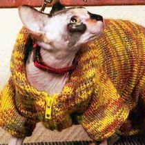 """7.2 Вязание для кошек - вязание для собак и кошек , свитера, кофты, попоны для собак, комбинезоны, шапочки, обувь для собак, скачать бесплатно книгу Корин Ниснер """"Вяжем для четвероногих модников"""", needleworkdogss Jimdo-Page!"""