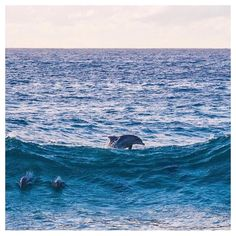 Check out our Surf clothing here! http://ift.tt/1T8lUJC Our good new mate @oliverrudloff  snaps a small squad of dolphins prancing in Byron bay doing their thang.  @oliverrudloff