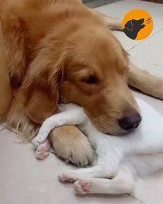 Cute Funny Dogs, Cute Funny Animals, Cute Cats, Funny Kittens, Funny Babies, Cute Animal Photos, Cute Animal Videos, Funny Animal Pictures, Baby Animals Super Cute