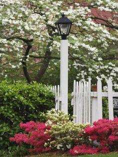 Dogwood trees and azaleas in bloom