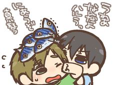Where to put the mackerel ...   From nko_f ... Free! - Iwatobi Swim Club, free!, iwatobi, makoto tachibana, makoto, tachibana, haruka nanase, haru nanase, haru, haruka, nanase