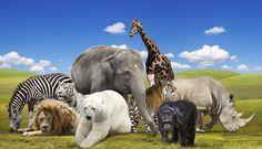 Il Sistema Circolatorio degli Animali e delle Piante