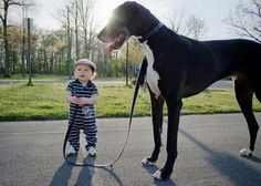 Totally gonna be my kid. Problem is he/she won't be taller than the dog until they're like 8! oh well. I love giants.