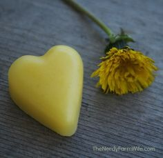 Dandelion Lotion Bars - I'm making these with the dandelions from the church near my house next year