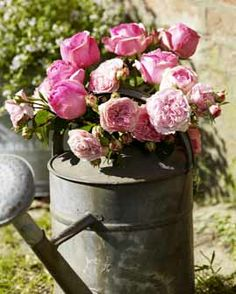deco & style - Gallery Flowers & Plants - Farm Living