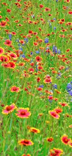 Retire in Texas Hill Country - Wildflowers - photo e>mar flickr commons - read article - http://boomerinas.com/2012/05/retire-in-the-texas-hill-country-the-natives-are-friendly-2/