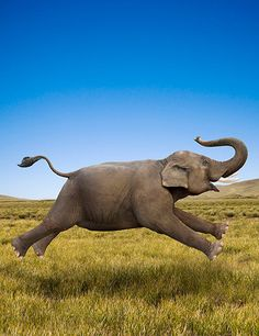 Elephant in motion by John Lund