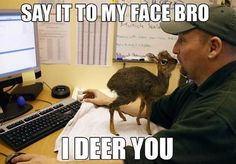 Funny images of the day, 55 images. Say It To My Face Bro, I Deer You