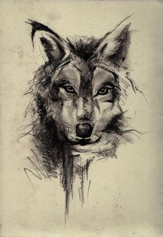 Wolf Face Sketch Art Wallpaper - Best iPhone Wallpaper