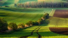 South Moravian fields lit by the rising sun Cool Landscapes, Photos Of The Week, Landscape Photography, Travel Photography, Nature Photos, Wonderful Places, Land Scape, Places To See, Fields
