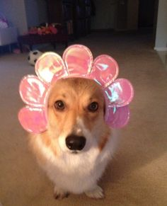 The cutest Corgi Flower that has ever bloomed!