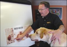 bed bug sniffing dogs