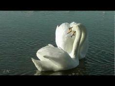 ▶ Весна... Ф. Лист - Утешение - Ferenc Liszt - YouTube
