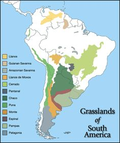 16 best kristins grassland shoebox project ideas images on pampas south america map gumiabroncs Gallery