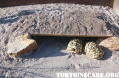 Underground hide with a few inches of sand over. Being in a hot climate, the hides stay 15 to 20 degrees cooler inside than the shaded areas at ground level (such as behind a clump grass)
