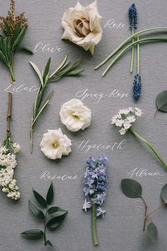 A modern take on traditional wedding bouquet preservation, The Heirloom Bouquet, is a custom fine art bridal product. Make your bouquet a family heirloom. Diy Wedding Bouquet, Floral Wedding, Wedding Flowers, Flower Farm, My Flower, Ikebana, Flower Meanings, Flower Names, Types Of Flowers