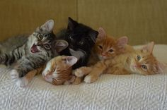 5 kitty pile-up #kittens  That one on the far left looks insane... he probably started it.