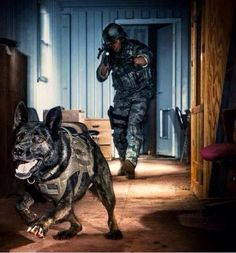 Someone is about to have a really, really, really bad night! #RespectTheK9