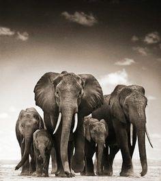 fauna_africana_preto_branco_