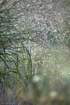 "willmarthofiaddison: "" Grasses Willmarth Farm, Vermont """