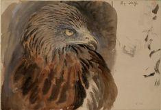 Ruskin, John - The Head of a Kite, from Life