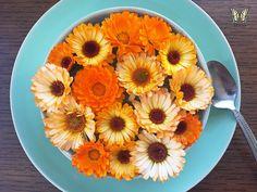 Calendulas are edible flowers! Annual Flowers, Flower Food, Flowers Perennials, Edible Flowers, Types Of Flowers, Calendula, Pansies, Clean Eating Snacks, Natural Remedies