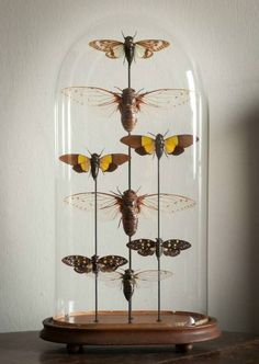 Cicada Dome in Decorative from Alex Macarthur