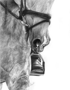 Image detail for -Head to Toe' Horse graphite pencil drawing by Sheona Hamilton-Grant
