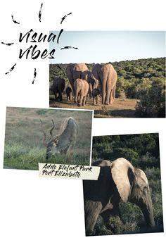 Travel Südafrika – die Garden Route und ihre Highlights, Addo Elephant Park – www.lifeviewstory.de