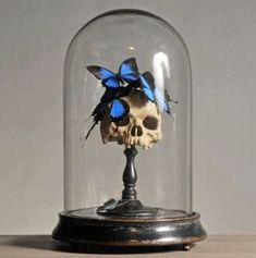 Butterfly skull decor in bell jar, goth fantasy room decor - Most creative decoration list Holidays Halloween, Halloween Crafts, Halloween Decorations, The Bell Jar, Diy Deco Rangement, Fantasy Rooms, Goth Home Decor, Gothic House, Paperclay