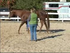 How to Train Your Horse to Lunge on a Line : How to Canter a Horse on a Line