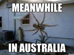 Meanwhile In Australia Spider Memes, SpiderMeme