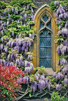 wisteria and stained glass window